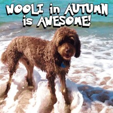 Anytime is a good time for furry family members at Unit 2 Beachcombers Wooli