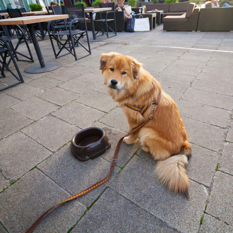 pet friendly cafes victoria