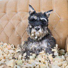 pet friendly accommodation etiquette