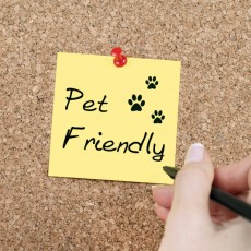 booking pet friendly accommodation