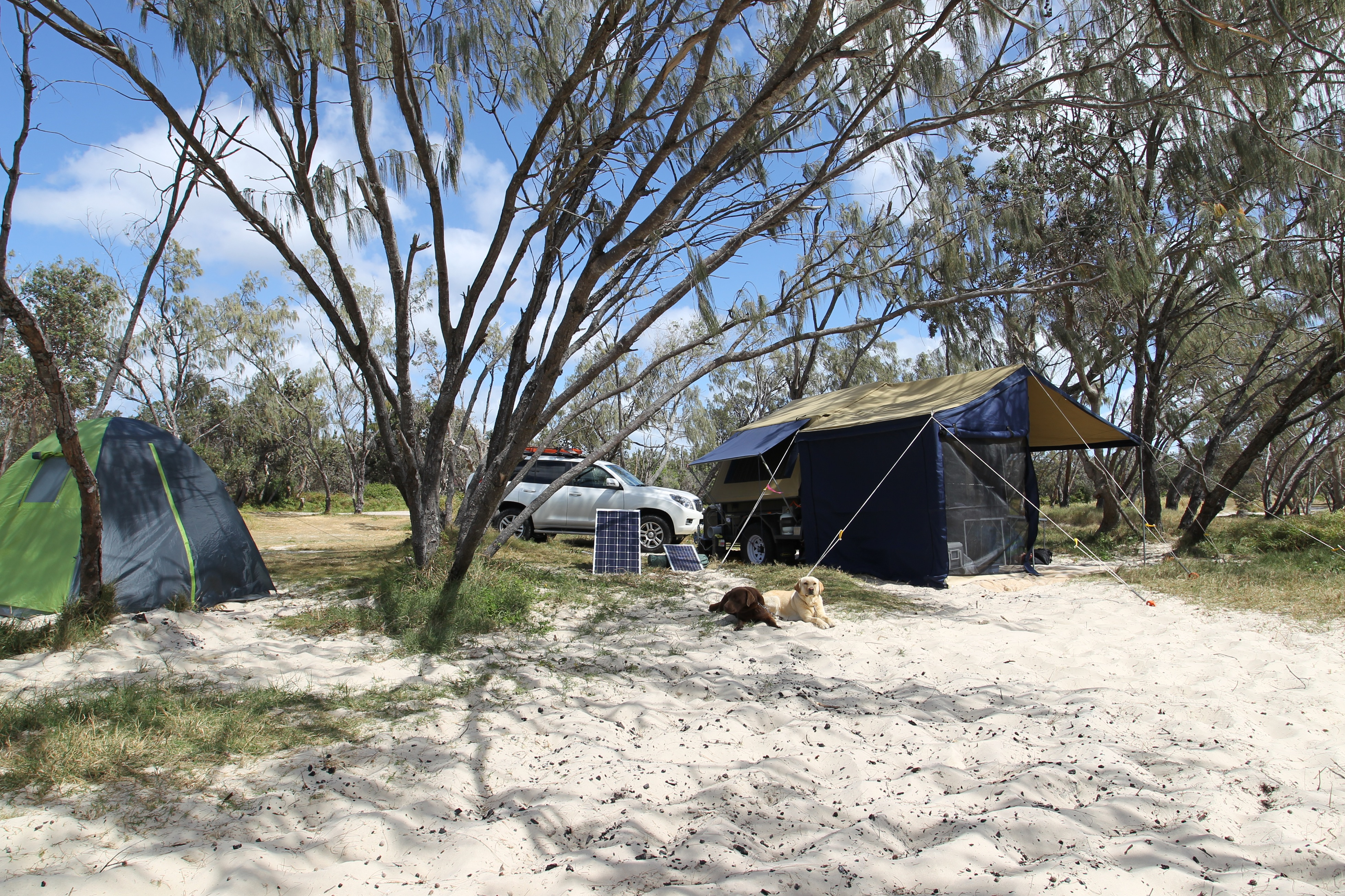 Beach Camping With Dogs Qld