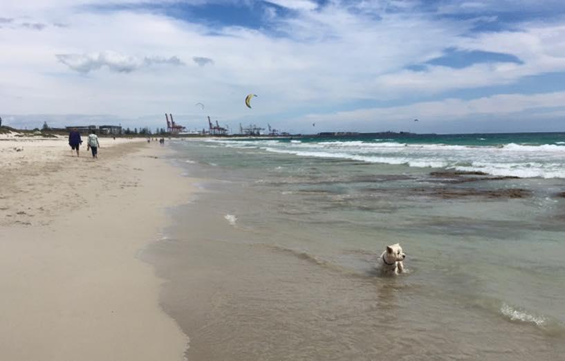 Dog Beaches North Of Perth
