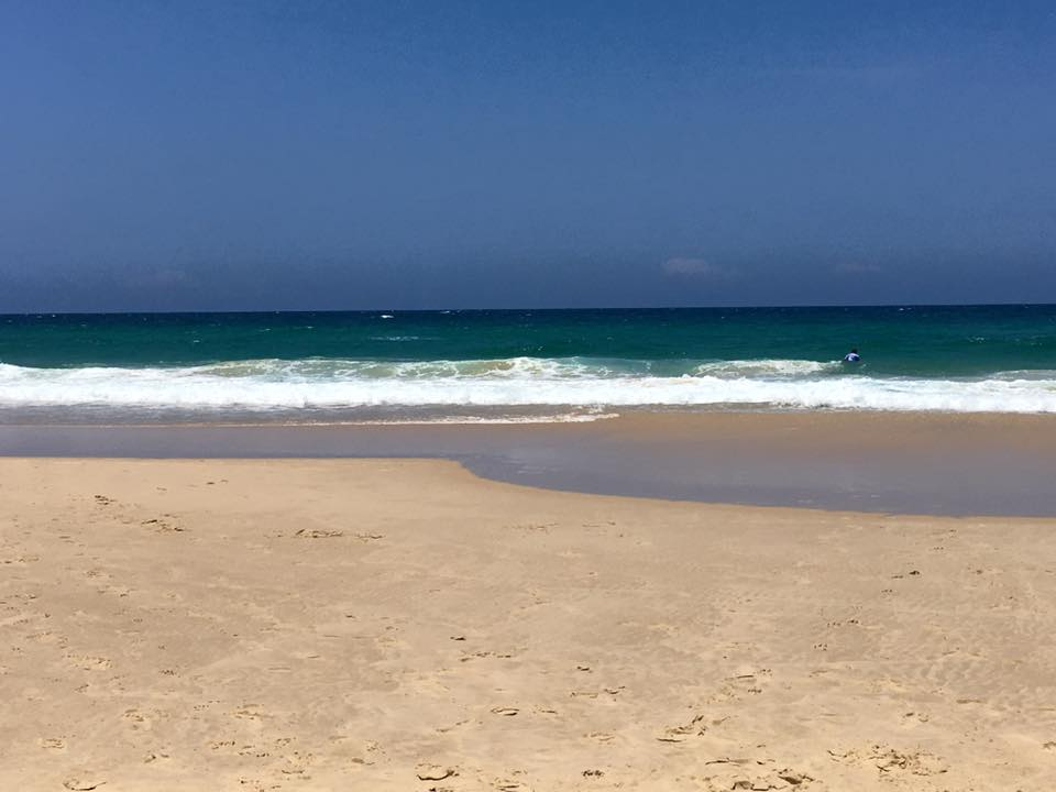 Best Dog Beaches Melbourne