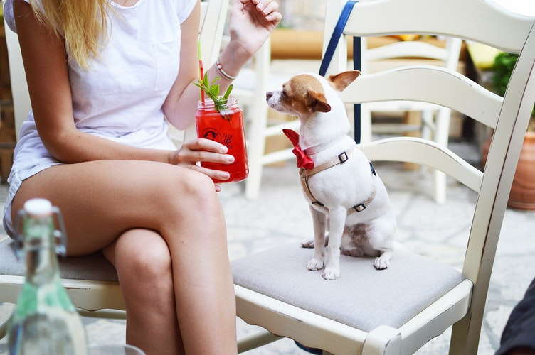 Sydney-Pet-Friendly-Cafes