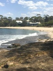 pet friendly colliers beach